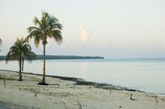 Sunrise on Maria la Gourda, Cuba. Sunrise on the beach and coconut trees of Maria la Gourda, Cuba Royalty Free Stock Photo