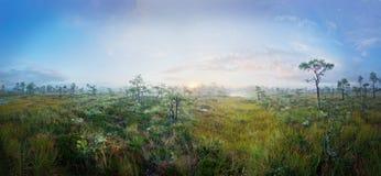 Sunrise. On marsh brings fog Stock Image
