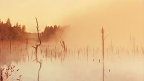 Sunrise on the marsh. Misty morning sunrise on the marsh stock video footage