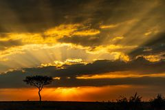 Sunrise on the Masai Mara, Kenya, Africa stock photography