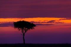 Sunrise in Masai Mara, Kenya Stock Photo