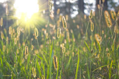 Sunrise on meadow Stock Photography