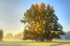 Sunrise on the meadow Royalty Free Stock Image