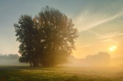 Sunrise on the meadow. Sunrise on a foggy meadow with trees Stock Photo