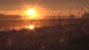 Sunrise in the meadow stock footage