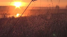 Sunrise in the meadow stock video footage