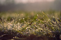Sunrise at the meadow Royalty Free Stock Photography