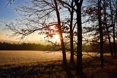 Sunrise at meadow Royalty Free Stock Image