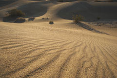 Sunrise Mesquite Sand Dunes-02 Royalty Free Stock Photography