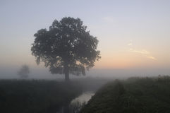 Sunrise in the mist Royalty Free Stock Photo