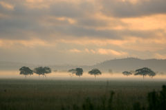 Sunrise Mist on The African Plains. A sunrise over the plains of Mikumi, Tanzania Stock Photography