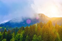 Sunrise and mist over the pine forest in the mountains. Cold and heat stock photography