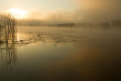 Sunrise mist on the river painted in sepia Royalty Free Stock Photos