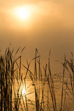 Sunrise mist on the river painted in sepia Royalty Free Stock Photography