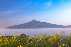 Sunrise and The Mist with Yellow Flowers Foreground in Winter ,This`s Mountain looks like Mount Fuji in Japan., Landscape at Phu H. Sunrise and The Mist with royalty free stock images