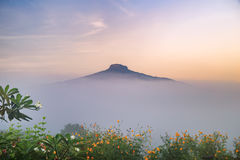 Sunrise and The Mist with Yellow Flowers Foreground in Winter ,This`s Mountain looks like Mount Fuji in Japan., Landscape at Phu H. Sunrise and The Mist with Stock Photos
