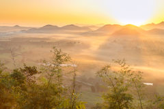 Sunrise and The Mist with Yellow Flowers Foreground in Winter ,This`s Mountain looks like Mount Fuji in Japan., Landscape at Phu H. Sunrise and The Mist with Royalty Free Stock Photography