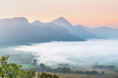 Sunrise and The Mist with Yellow Flowers Foreground in Winter ,This`s Mountain looks like Mount Fuji in Japan., Landscape at Phu H. Sunrise and The Mist with royalty free stock image