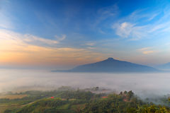 Sunrise and The Mist with Yellow Flowers Foreground in Winter ,This`s Mountain looks like Mount Fuji in Japan., Landscape at Phu H. Sunrise and The Mist with Royalty Free Stock Photos