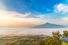 Sunrise and The Mist with Yellow Flowers Foreground in Winter ,This`s Mountain looks like Mount Fuji in Japan., Landscape at Phu H. Sunrise and The Mist with royalty free stock photo