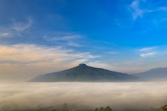 Sunrise and The Mist with Yellow Flowers Foreground in Winter , This`s Mountain looks like Mount Fuji in Japan. , Landscape at Phu. Sunrise and The Mist with stock image