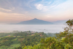 Sunrise and The Mist with Yellow Flowers Foreground in Winter ,This`s Mountain looks like Mount Fuji in Japan., Landscape at Phu H. Sunrise and The Mist with Stock Photography