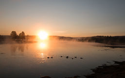 Sunrise mist on the Yellowstone River with Canadian Geese flying over swimming Trumpeter Swans in the Hayden Valley Stock Photo