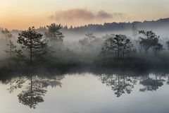 Sunrise in the misty bog during summer stock image