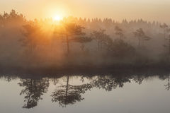Sunrise in the misty bog during summer royalty free stock photos