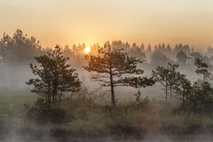 Sunrise in the misty bog during summer. In Transylvania, Romania Stock Photography