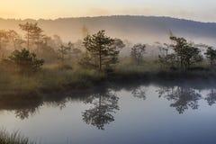 Sunrise in the misty bog during summer. In Transylvania, Romania stock photos