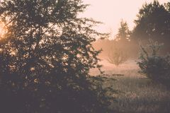 Sunrise in misty country meadow - retro vintage look. Sunrise in misty country meadow with electricity lines in background - retro vintage film effect Stock Image