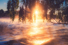 Sunrise misty lake. With reeds and waves stock images