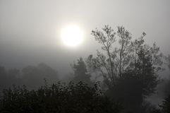 Sunrise on a misty morning Royalty Free Stock Images