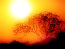 Sunrise on a misty morning. With a tree silhouette and a rising huge, red sun stock images