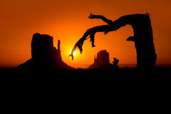 Sunrise at Monument Valley West and East Mittens Butte. With dried branch tree royalty free stock photo