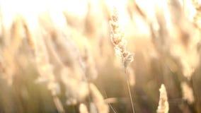 Sunrise Morning stock footage