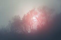 Sunrise in morning fog stock photo