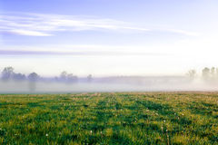 Sunrise in morning foggy field. Outdoors. Royalty Free Stock Images