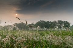 Sunrise morning with grass meadow in foreground with morning mis. T, Pattaya, Thailand Stock Photos