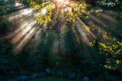 Sunrise. The morning sun through the trees and fog royalty free stock photos
