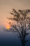Sunrise in morning with tree silhouette Stock Photo