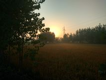 Sunrise. Morning view in fields Stock Photos