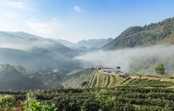 Sunrise in the morning with white fog at green terraced tea plantation 2000 Doi Ang khang the north of Thailand Royalty Free Stock Photos