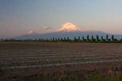 Sunrise on Mount of Ararat. Mount Ararat behind the field and the alley of poplar Royalty Free Stock Image