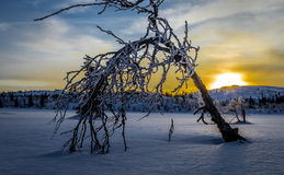 Sunrise in the mountains. One small tree bends for winter Stock Image