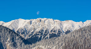 Sunrise in the mountains, with snow covered peaks, frost covered fir trees and setting moon Stock Image
