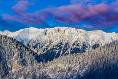 Sunrise in the mountains, with snow covered peaks, frost covered fir trees and setting moon Stock Photography