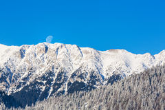 Sunrise in the mountains, with snow covered peaks, frost covered fir trees and setting moon Stock Images