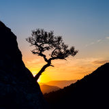 Sunrise in mountains with tree silhouette and sea. Royalty Free Stock Photos